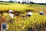 Huyện Yên Thành - Nghệ An